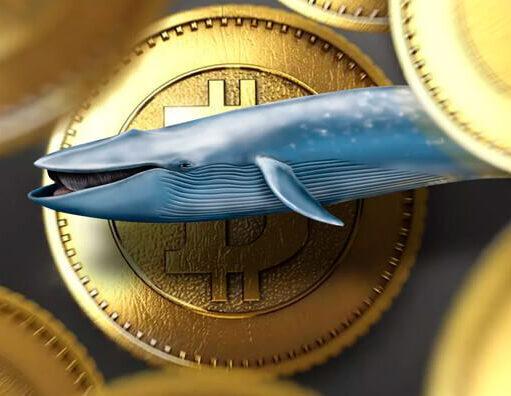 Биткоин киты